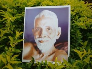 ramana maharshi herbal medicine